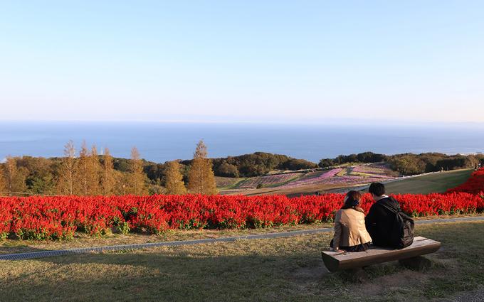 Nơi đây thu hút nhiều bạn trẻ và các đôi tình nhân đến ngắm hoa, họ cùng đi dạo, vui chơi và ăn uống.