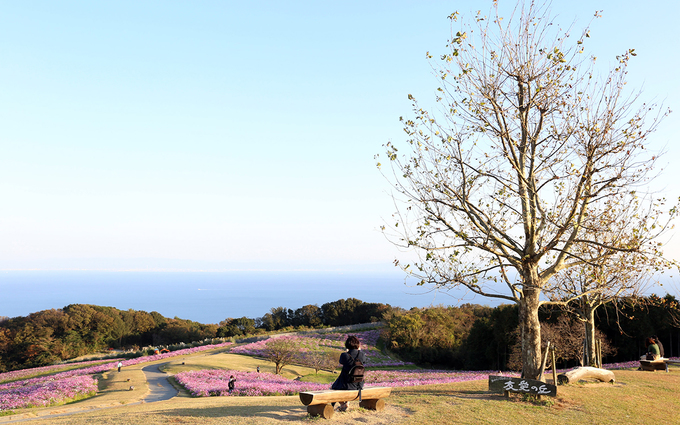 Công viên hoa trải dài hàng nghìn m2 bên vịnh Osaka nên du khách không chỉ ngắm hoa mà còn có thể thưởng ngoạn phong cảnh vịnh.