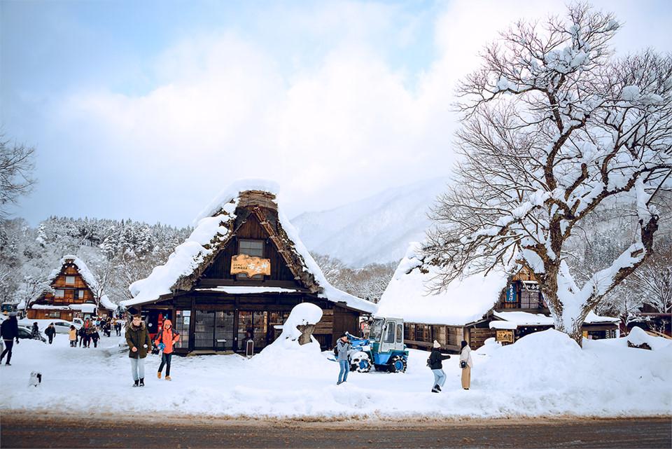 Từ tỉnh Ishikawa, tôi mất khoảng 3 tiếng đồng hồ ngồi trên xe buýt để đến được ngôi làng. Thời điểm này, nơi đây đang chào đón rất nhiều du khách, đặc biệt là những bạn trẻ đến để check-in, chụp ảnh.