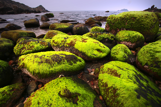 Vào dịp đầu năm, những phiến đá lớn nhỏ sát bờ phủ đầy rêu xanh lộ ra khi thủy triều rút.