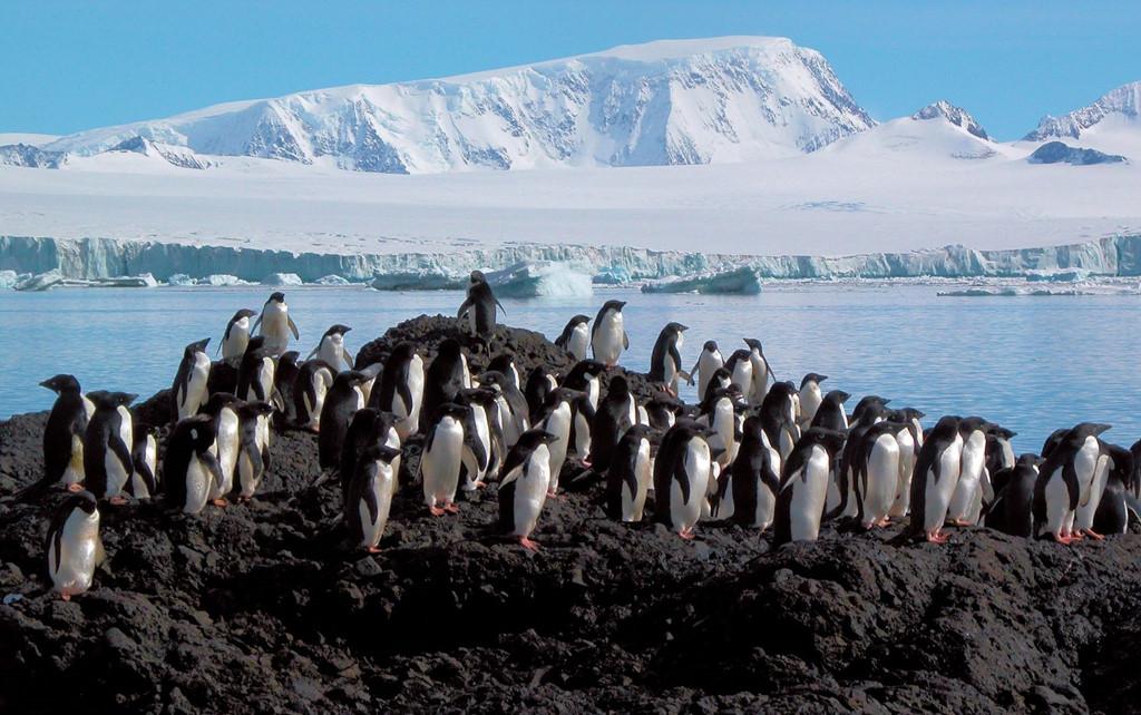 Gợi ý hành trình chinh phục bán đảo Nam Cực, vùng băng giá nhất Trái Đất – iVIVU.com