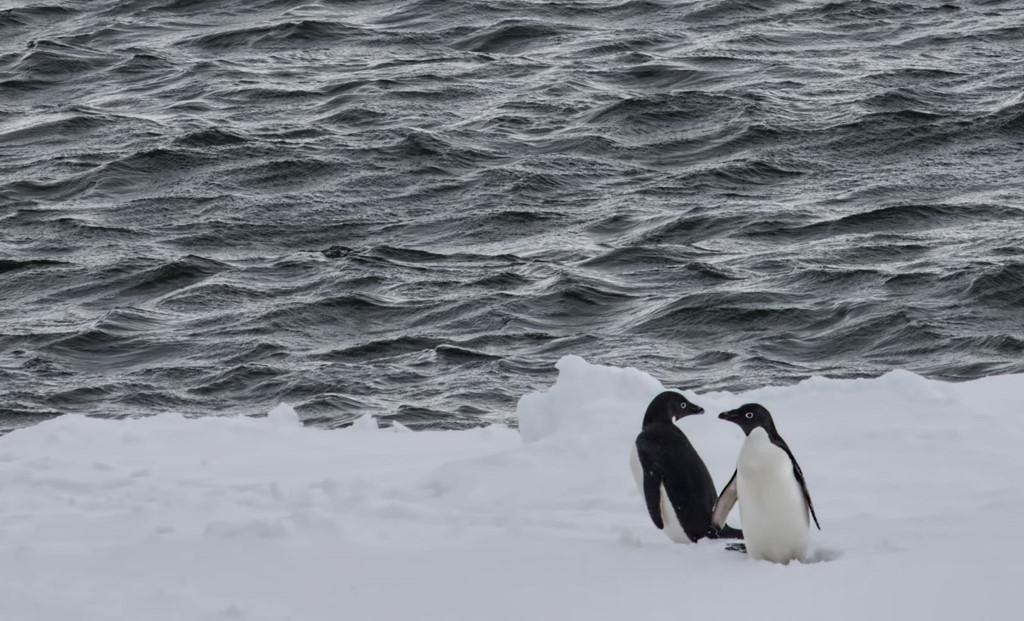 Nam Cực là miền đất dành cho những ai ưa khám phá.