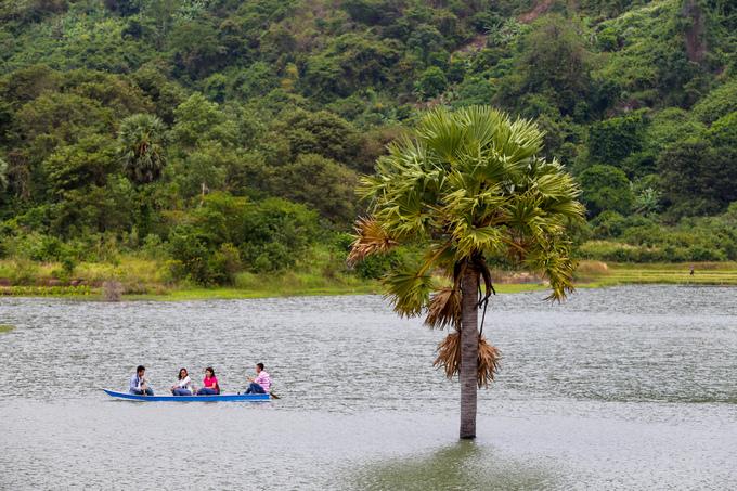 Thốt nốt mọc thành hàng hoặc đứng đơn lẻ ở vùng chân núi, ruộng đồng và phân bố nhiều ở các huyện biên giới Tri Tôn, Tịnh Biên.