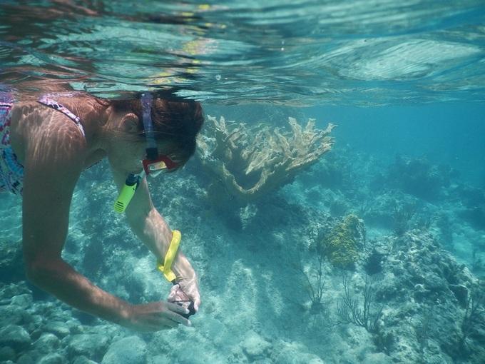 Nơi đây rất lý tưởng để lặn, lướt ván. Khách có thể thuê canô, kayak hay kính lặn ở khu nghỉ dưỡng.