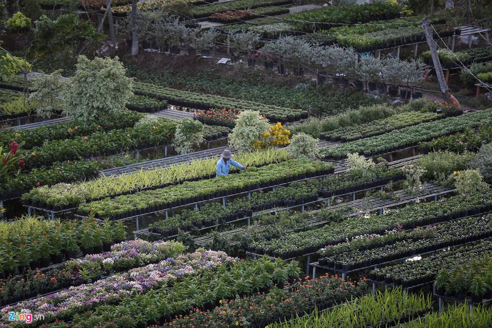 Đây là nơi ươm mầm gần 2.000 loại hoa kiểng, với diện tích trồng hoa hơn 85 ha và gần 2.000 hộ dân làm nghề.