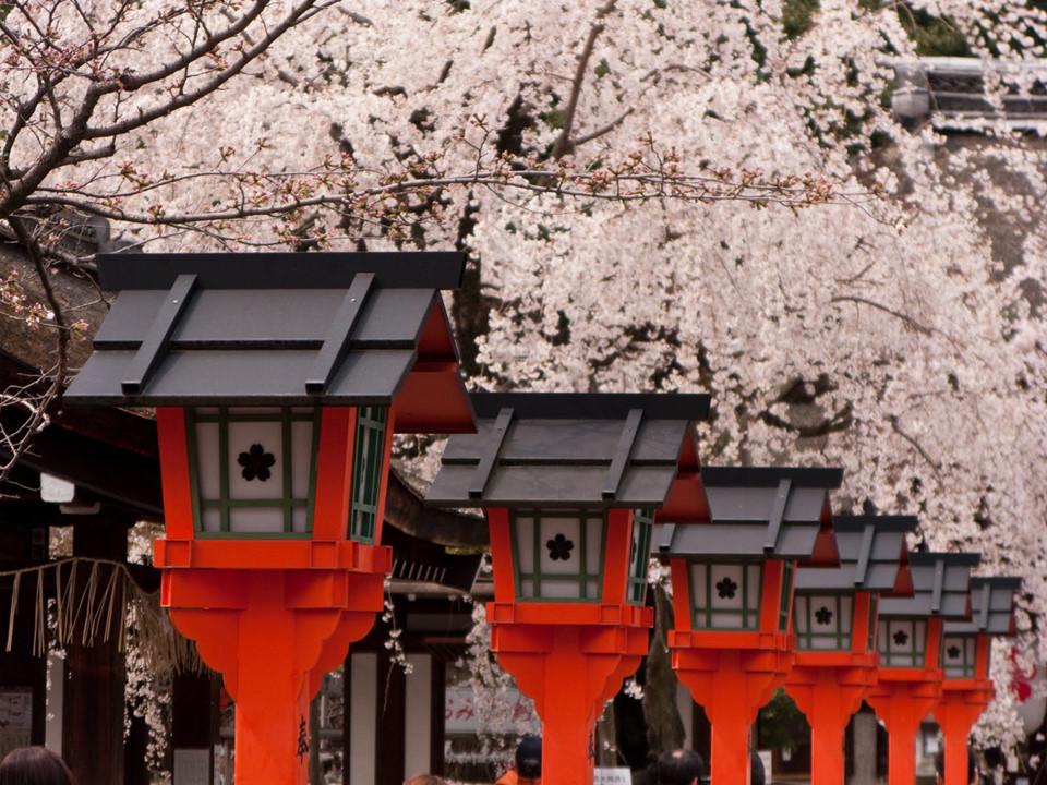 Đến với Kyoto, ngoài ngắm hoa, chắc chắn, bạn không nên bỏ lỡ rừng trúc Sagano, Hoàng cung Kyoto, khu chợ Nishiki, viện bảo tàng manga, phố cổ Gion và chùa Kiyomizu. Ảnh: Shutterstock.