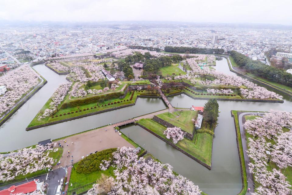 Nếu muốn ngắm hoa anh đào tại Hokkaido, bạn có thể đến công viên Matsumae, pháo đài Goryokaku, công viên Hakodate, đường Shizunai Nijukken, công viên Maruyama, công viên Moerenuma, công viên Nakjjima, công viên Asahiyama, đường Noboribetsu Onsen Sakura, chùa Seiryuji. Ảnh: Kyodo.