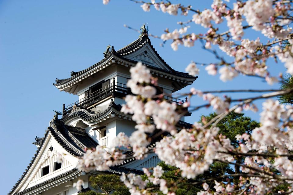 Trung tâm hành chính của tỉnhlà thành phố cùng tên, Kochi, nơi nổi tiếng với bề dày lịch sử 400 năm. Đến đây, ngoài ngắm hoa anh đào, du khách có thể đến thăm một số địa điểm du lịch khác như thành Kochi, bảo tàng kỷ niệm Sakamoto Ryoma, chùa Chikurin-ji, bảo tàng kỷ niệm tác giả truyện tranh Yokoyama Ryuichi, bảo tàng lịch sử Ryoma, hang Ryuga-do và bảo tàng tư liệu di tích nhà cổ của võ sĩ samurai ở Okawai-suji. Ảnh: Shutterstock.