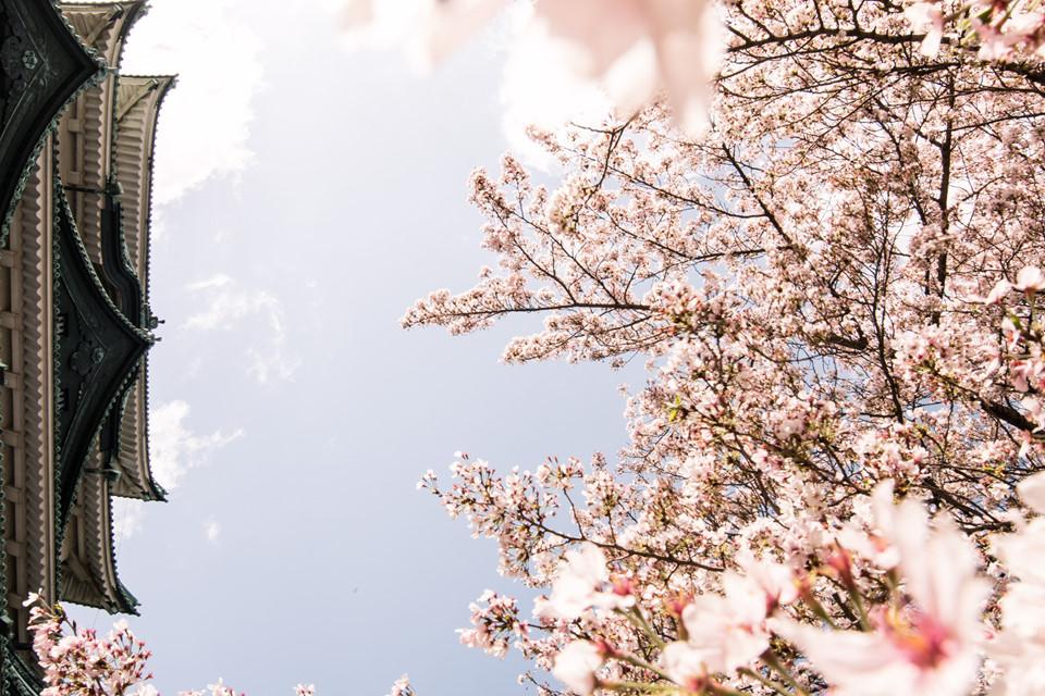 Ngoài ngắm hoa, du khách có thể đến thăm bảo tàng nghệ thuật Tokygawa, bảo tàng kỷ niệm kỹ thuật công nghiệp Toyota, tháp truyền hình Nagoya, Oasis 21, Osu Shotengai, Atsuta Jingu, bảo tàng khoa học thành phố Nagoya, bảo tàng đường sắt Linear, Legoland, khu Endoji Shotengai và Shikemichi.