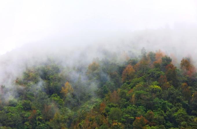 Thời điểm này, vùng Đông Bắc đang vào giai đoạn mưa phùn ẩm, lá của cây nhanh chóng đổ vàng, xen lẫn những đám mây luồn qua tạo cảnh sắc mờ ảo.