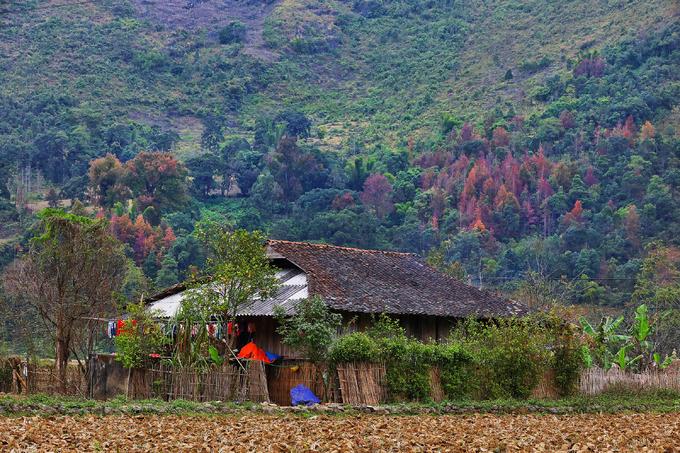Một ngôi nhà của đồng bào dân tộc Tày nằm dưới chân núi có nhiều cây sâu mọc thành hàng lớp.