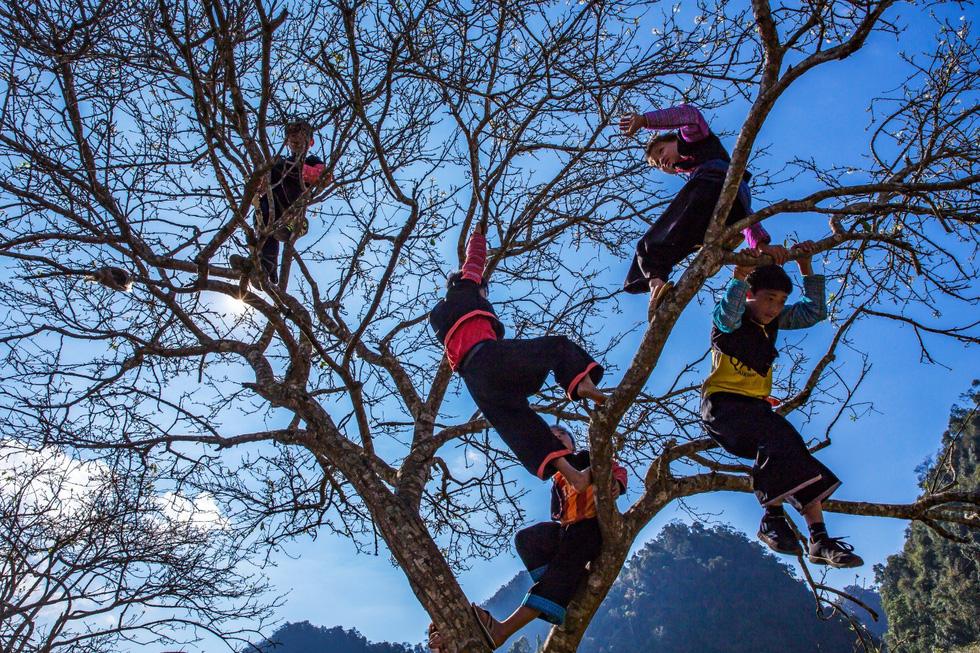 Đám trẻ lí lắc trèo cao trên cây - Ảnh: CAO KỲ NHÂN