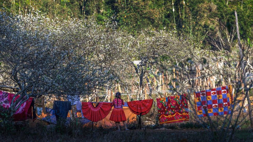 Những váy xòe nhiều sắc màu làm bừng sáng vùng cao nguyên Mộc Châu - Ảnh: CAO KỲ NHÂN