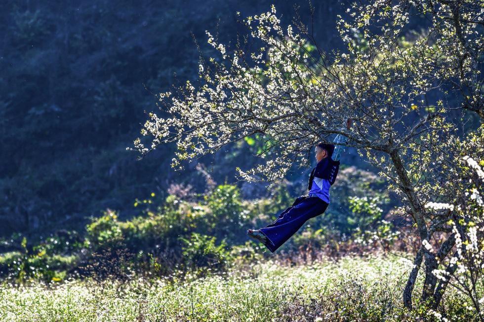 Cậu bé đu trên nhành cây mận nở trắng tinh khôi - Ảnh: CAO KỲ NHÂN
