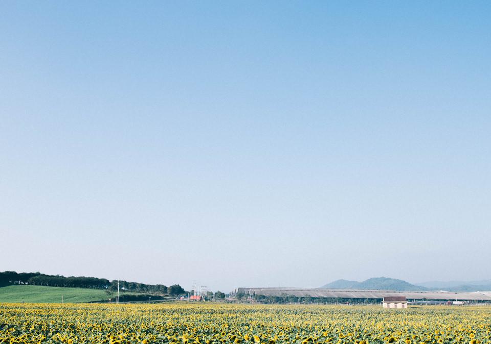 Vào những ngày cuối cùng của năm 2018, mình may mắn được đặt chân tới cánh đồng hoa mặt trời mà trước giờ mình luôn ấp ủ kế hoạch ghé đến. Chẳng cần đi đâu xa xôi, ở ngay xứ Nghệ cũng có cánh đồng hướng dương mênh mông vàng rực đẹp chẳng kém đồng hoa mặt trời nào ở Nhật Bản hay ở Nga.