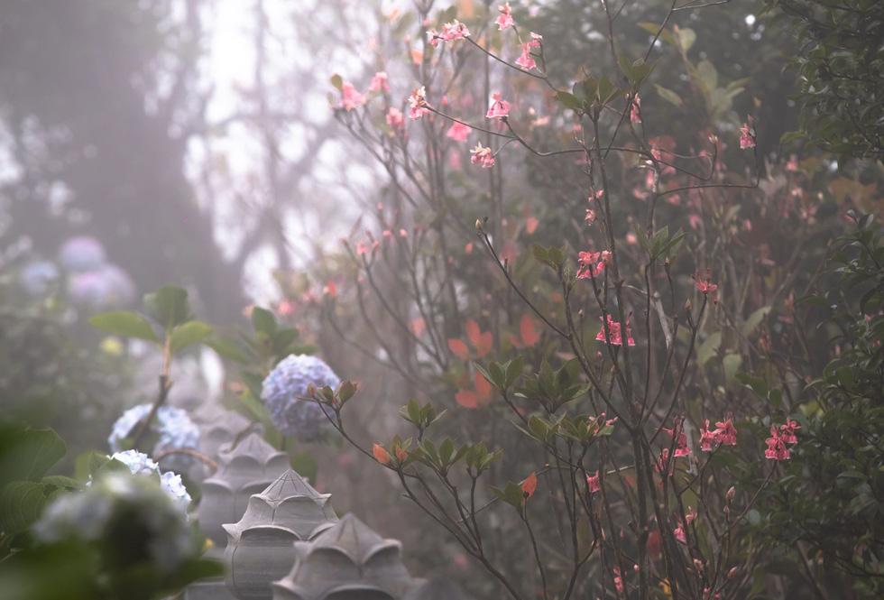 Một góc Trú Vũ Trà Quán rực sắc hồng hoa đào chuông trong nắng sớm tại khu du lịch Bà Nà - Ảnh: ƯỚC PB