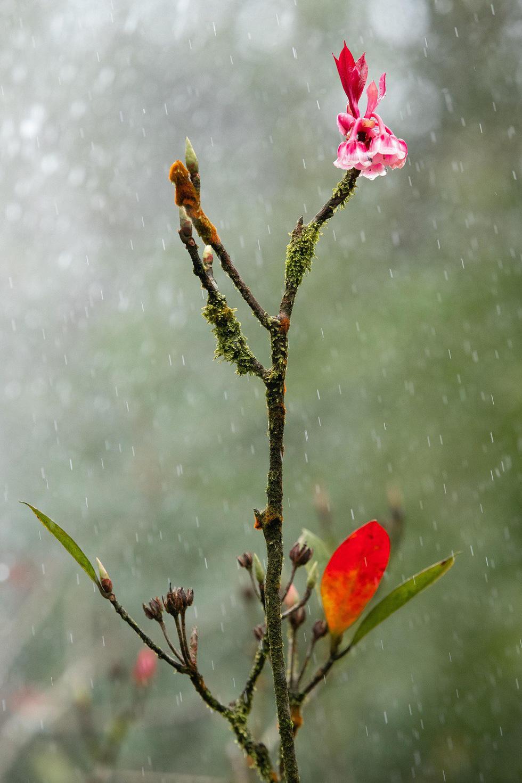 Trong cơn mưa phùn Bà Nà - Ảnh: ƯỚC PB