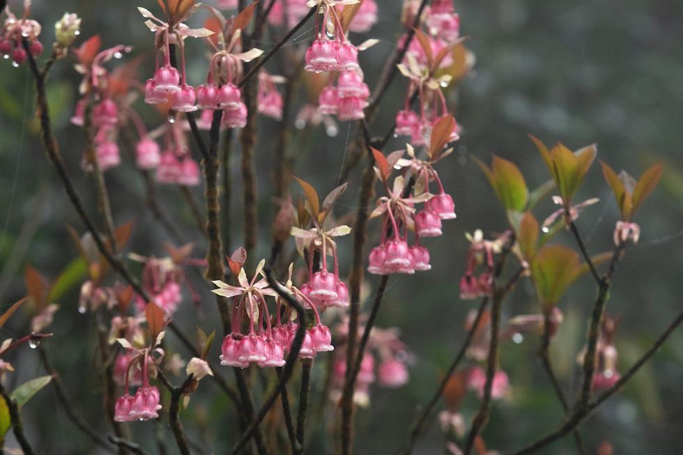 Những bông hoa đẹp rực rỡ trong nắng mai - Ảnh: ƯỚC PB