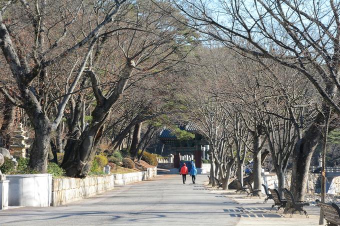 Lối vào chùa chạy dọc một con suối lớn, cách khoảng trăm mét lại có cây cầu cong cong bắc qua, hai bên là rừng thông.