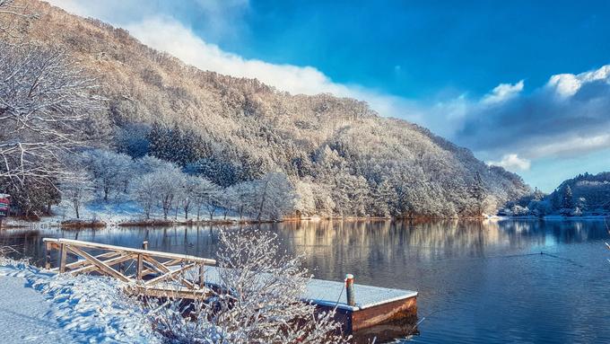 Rừng ven hồ là nơi bạn sẽ được ngắm những cây thông phủ tuyết thật ngoài đời, không còn là những nhánh cây giả phủ tuyết giả trong các cửa hàng lưu niệm bán đồ trang trí Giáng Sinh.