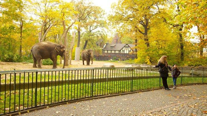 Vườn thú Berlin là ngôi nhà của hơn 19.400 cá thể động vật thuộc hơn 1.380 loài. Vườn thú mở hàng ngày từ 9h, giờ đóng cửa thay đổi theo từng tháng. Vé tham quan vườn thú giá 15,5 euro (hơn 410.000 đồng) với người lớn, 8 euro (hơn 210.000 đồng) với trẻ em. Vé tham quan cả khu vườn thú và thủy cung giá 21 euro (gần 560.000 đồng) cho người lớn, và 10,5 euro (gần 280.000 đồng) cho trẻ em. Ảnh: Travel Notes.