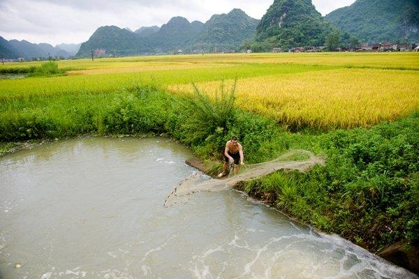 Người dân quăng chài đánh cá cạnh một cánh đồng.