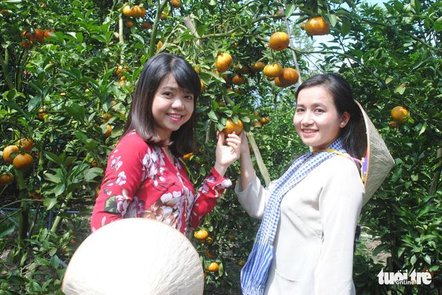 Quýt hồng Lai Vung vào vụ chín, thu hút khách tham quan - Ảnh 5. Du khách trải nghiệm tham quan vườn quýt - Ảnh: THÀNH NHƠN