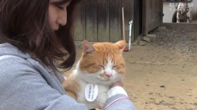 """Mèo Sanjuro hội ngộ với chủ cũ Namba. Cô này quyết định để mèo cưng của mình ở lại với vị trí """"chúa tể"""" của lâu đài này."""