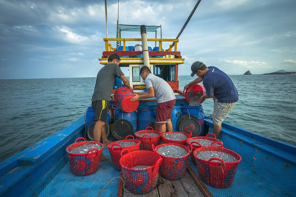 Cá cơm ngần sau khi kéo lên được đựng vào các sọt nhựa và bảo quản trong những chiếc khạp - Ảnh: TRẦN BẢO HÒA