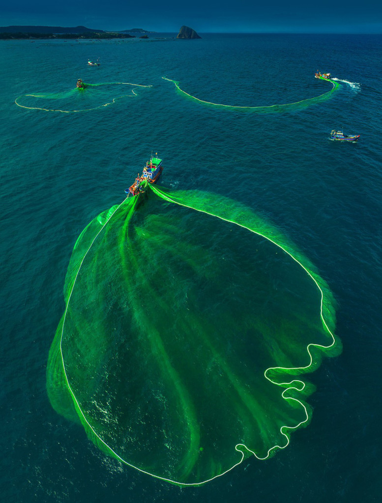 """Những chiếc """"hoa lưới"""" màu xanh - Ảnh: TRẦN BẢO HÒA"""
