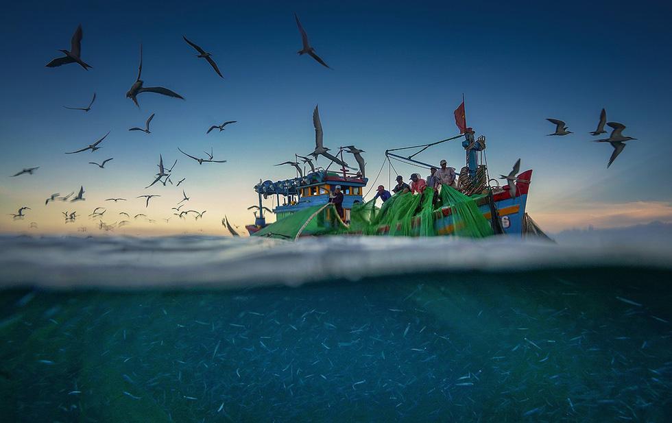 """Luồng cá cơm ngần có thân trắng muốt nhìn rõ dưới làn nước biển, trên mặt nước là đàn chim hải âu sà xuống thưởng thức """"đại tiệc"""" của đại dương - Ảnh: TRẦN BẢO HÒA"""