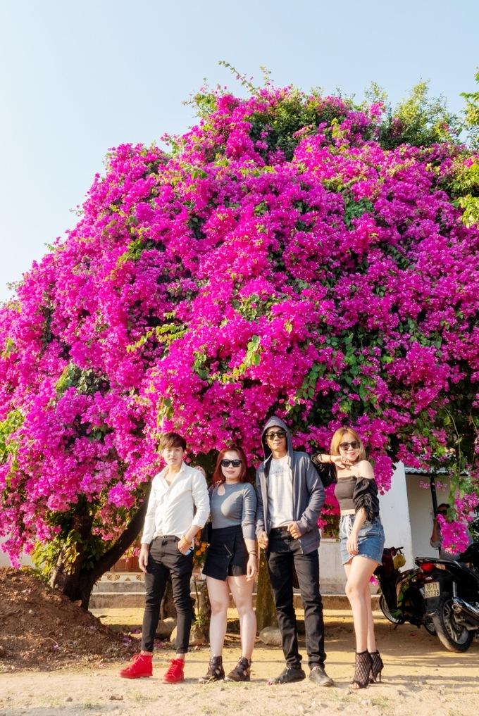 Cây hoa giấy khổng lồ trở thành điểm thu hút nhiều gia đình, các bạn trẻ tới ngắm và chụp hình.