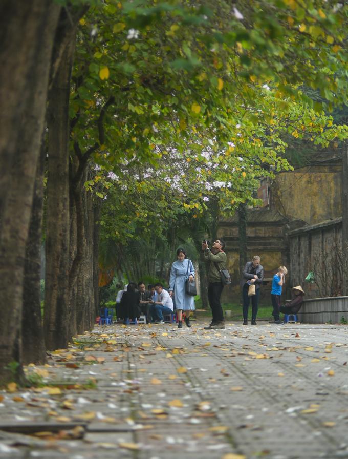 Dù thời tiết mây mù và mưa nhỏ, nhiều người vẫn dừng bước ở vỉa hè đường Hoàng Diệu, khu vực gần Hoàng Thành, để ngắm nhìn và lưu lại những khoảnh khắc bên loài hoa của Tây Bắc.
