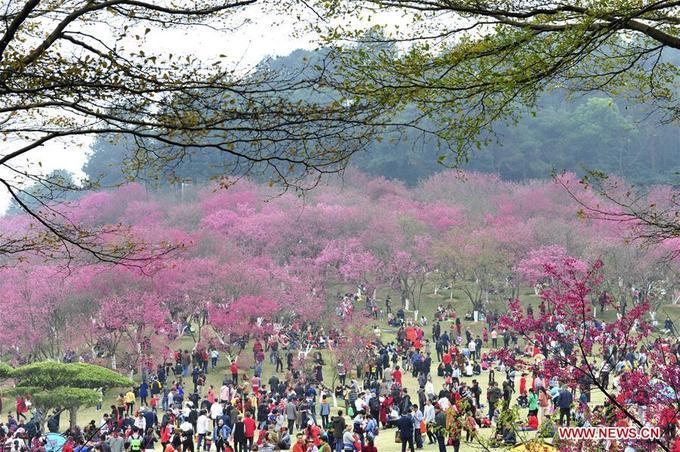 Du lịch Trung Quốc ngắm hoa đào mùa xuân đẹp như tranh – iVIVU.com