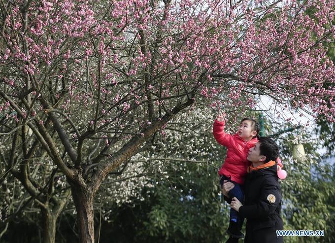 Không rực rỡ như hoa anh đào Nhật Bản hay Hàn Quốc nhưng phong tục ngắm hoa đào ngày đầu xuân cũng là một nét văn hoá ngàn năm của người Trung Quốc, đã đi vào thơ ca.