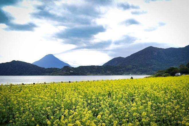 """Ngoài Sakurajima, tỉnh Kagoshima còn có nhiều núi lửa đã """"nghỉ ngơi"""". Nổi bật nhất là núi Kaimon (Kaimonndake) bên cạnh hồ Ikeda thuộc thành phố Ibusuki đã ngưng nghỉ sau đợt phun trào vào năm 885. Hồ Ikeda được hình thành sau một đợt núi lửa phun trào hơn 6400 năm trước, và là hồ nước được hình thành từ núi lửa lớn nhất vùng Kyushu của Nhật Bản. Dọc hồ Ikeda nước xanh thẫm yên bình là công viên với cánh đồng hoa cải vàng hoặc hoa cúc sao nháy (hoa cosmos) ngập tràn trong gió."""