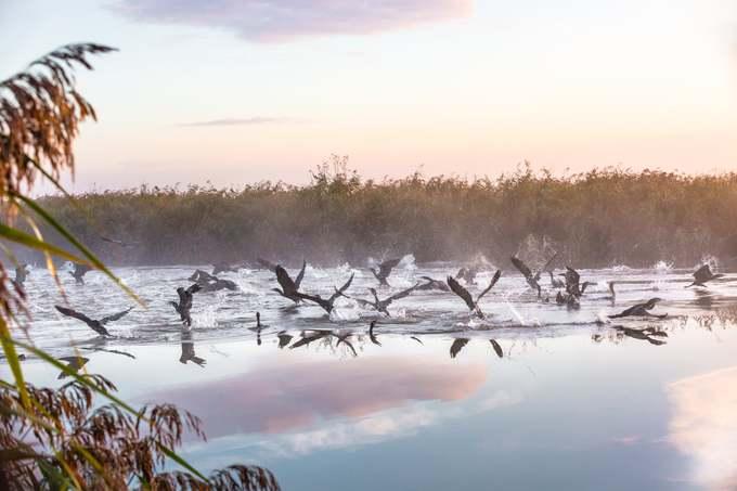 Bức ảnh của Helen Storer vào top ảnh ấn tượng chụp đàn chim ở công viên Broads. Đây là vùng đất ngập nước được bảo vệ lớn nhất nước Anh, thành lập tháng 4/1989 với 303 km2. Các con sông, hồ cạn rộng lớn và đầm lầy làm cho khu vực này có các loài động thực vật đa dạng.-o-anh-ivivu-3