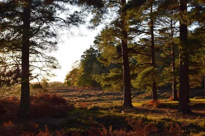 Công viên New Forest là vườn quốc gia nhỏ nhất tại Anh, có diện tích 580 km2. Trong khu vực này có khoảng 700 loài hoa dại, 5 loài hươu và nhiều động thực vật khác.