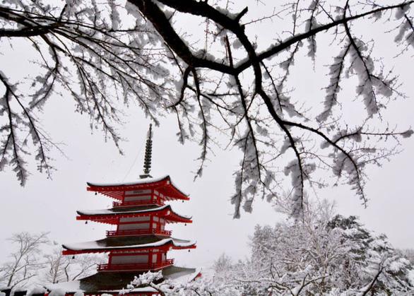 Khung cảnh mùa đông kỳ ảo ở Nhật - Ảnh: Live Japan.