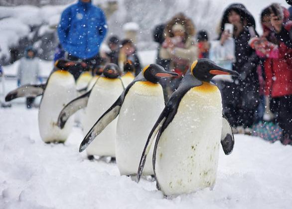 Lễ hội mùa đông ở Hokkaido - Ảnh: Live Japan