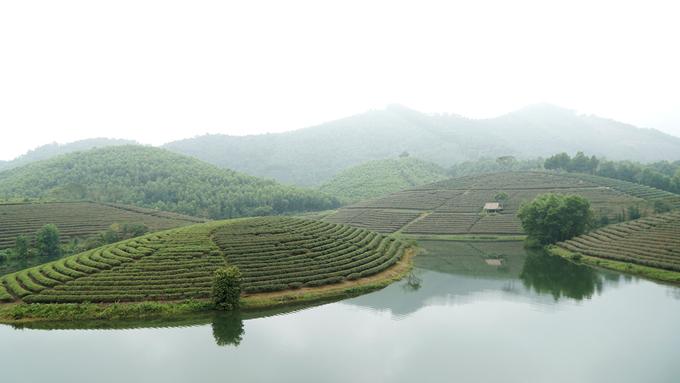 Nằm trên đường Hồ Chí Minh, gần vùng biên giới với Lào, cách thành phố Vinh chừng 50 km và Cửa Lò khoảng 70 km, đồi chè Thanh Chương (Nghệ An) có khung cảnh lạ mắt khi được bao quanh bởi mặt nước. Hơn 50 năm trước, nơi đây là hồ thủy lợi được xây dựng với mục đích tưới tiêu cho hơn 700 ha lúa nước của 2 xã Thanh An và Thanh Thịnh, huyện Thanh Chương. Người dân vùng này bắt đầu trồng chè cách đây khoảng 3 năm. Hiện có gần 200 hộ dân trồng chè với diện tích hơn 400 ha.