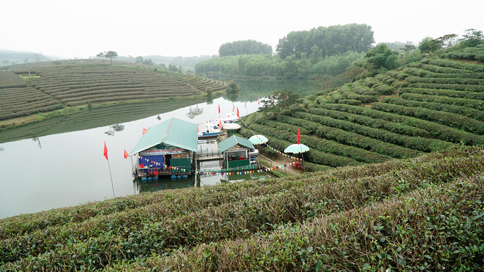 Với đồi chè Mộc Châu, Thái Nguyên hay Đà Lạt, du khách có thể đi bộ vào chơi ở những cánh đồng bát ngát, trải dài tít tắp thì Thanh Chương sẽ làm bạn ngạc nhiên khi để tham quan, bạn phải ngồi thuyền.