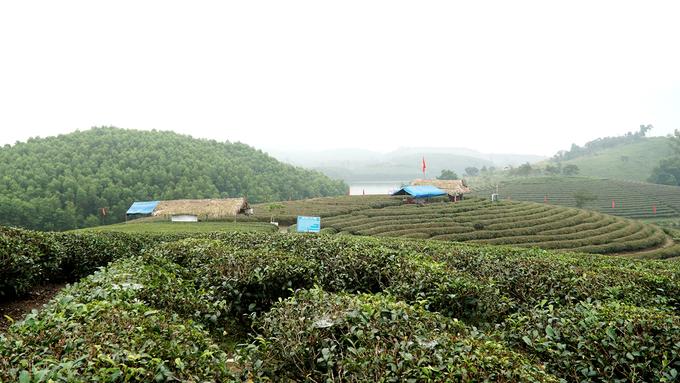 Một số hộ dân dựng các lán trên đảo, vừa để trông nom chè vừa phục vụ du khách nước trà xanh, kẹo lạc, kẹo cu-đơ; cho thuê mũ nón, trang phục, dụng cụ hái chè...