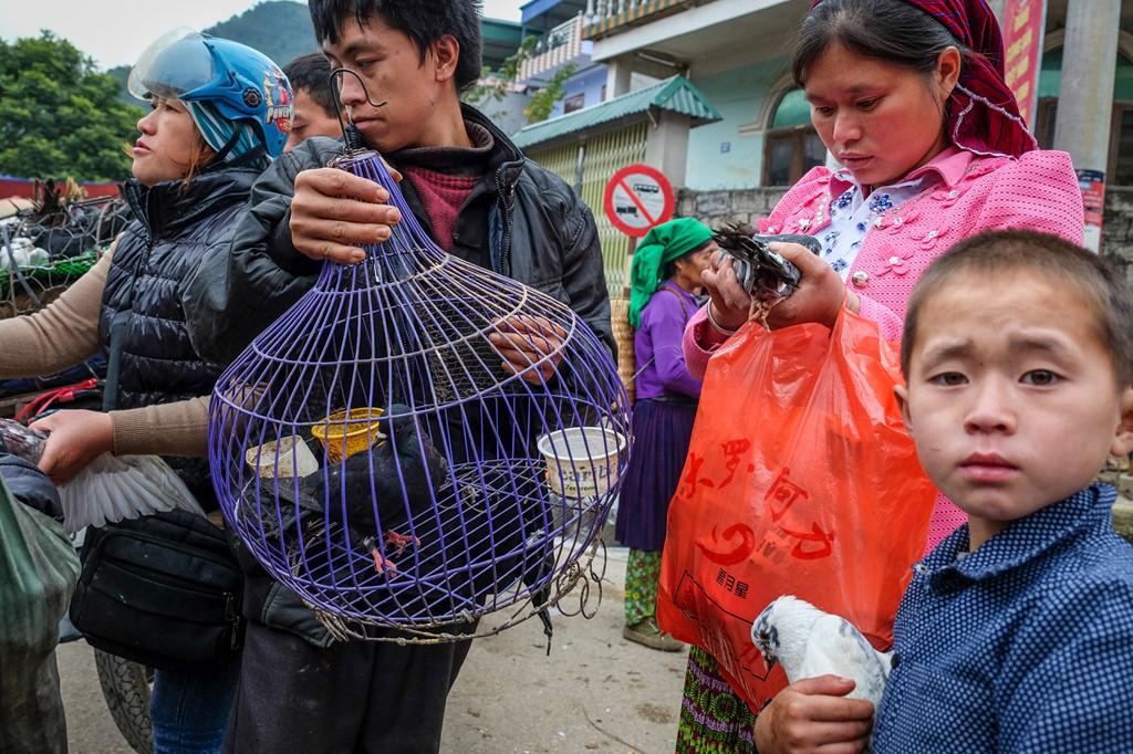Ngoài các loại động vật như trâu bò lợn gà, chợ Mèo Vạc cũng mua bán chim. Trong ảnh là cặp vợ chồng vừa mua một chú chim bồ câu về làm cảnh.