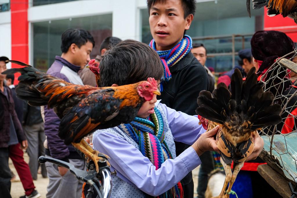 """Cậu bé người Mông đang chăm chút cho chú gà của mình. Khu vực mua bán gà tập trung nhiều thanh thiếu niên. Với các cậu bé, chợ là nơi gỡ bạn bè và cho những chú gà của mình """"tỷ thí""""."""