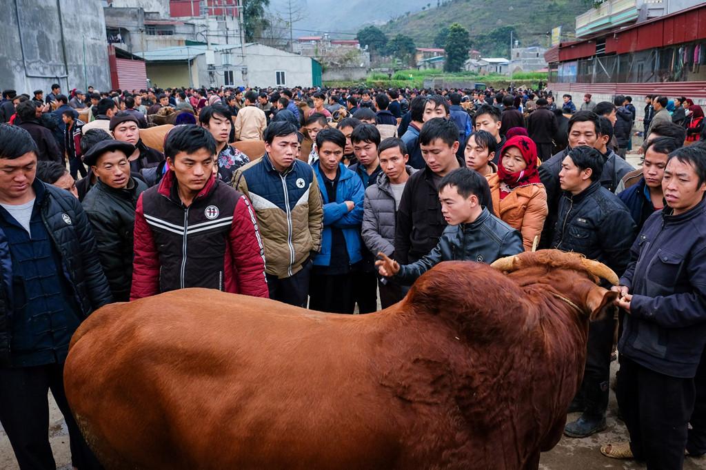 Một lái buôn bò đang mặc cả với người bán. Phiên chợ trâu bò rất sôi động với sự tham gia của các lái buôn từ nhiều nơi ở miền Bắc.