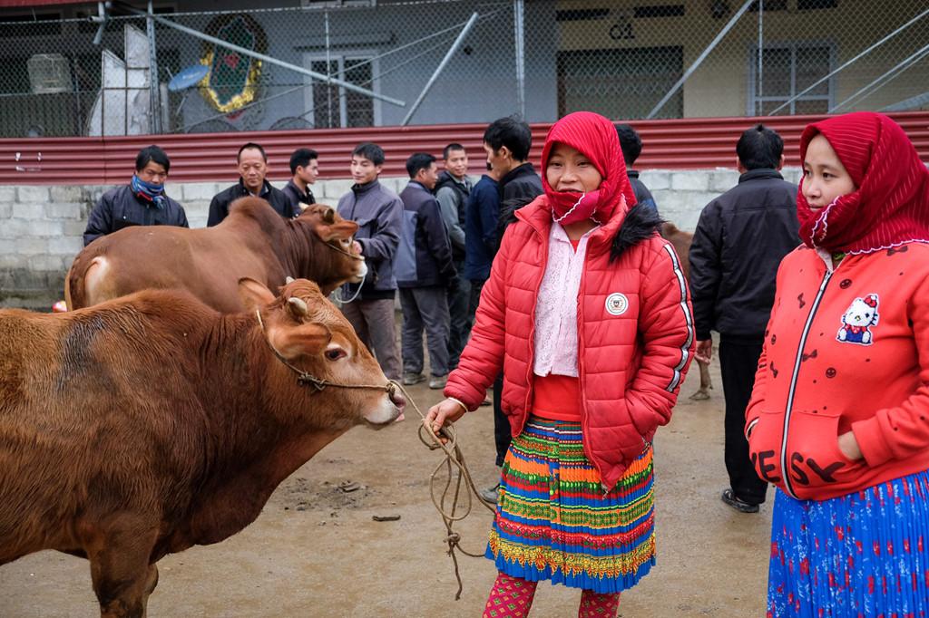 Chị Và Là Dia cùng em gái mang bò từ Khâu Vai (Hà Giang) xuống chợ Mèo Vạc tham gia phiên chợ. Để tới đây, hai người phụ nữ đã phải vượt qua một quãng đường núi khá dài.