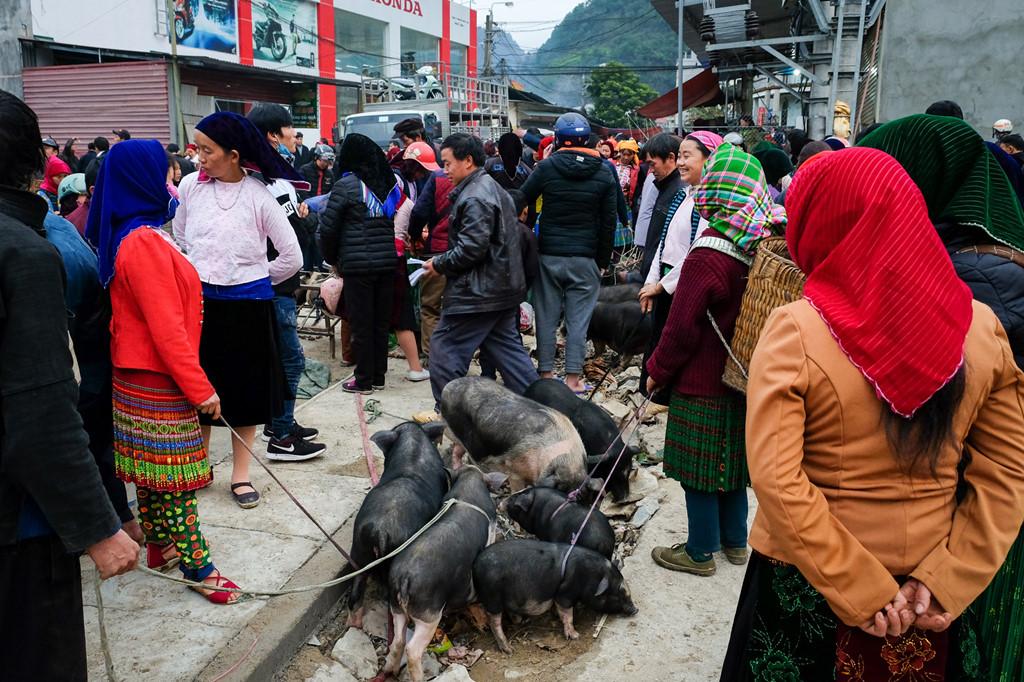 """""""Lợn cắp nách"""", giống lợn thuần chủng của người Mông, cũng là mặt hàng giao thương phổ biến ở nơi đây."""
