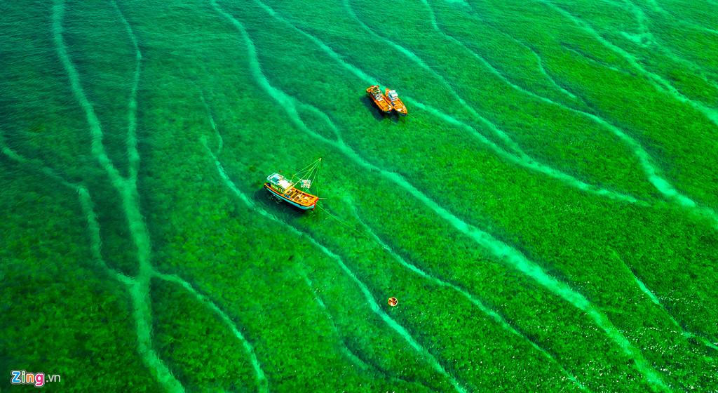 """Tàu thuyền ngư dân huyện đảo Lý Sơn như lạc giữa """"rừng san hô"""" đan xen với thảm rêu dày đặc dưới làn nước trong vắt tạo cảm giác thích thú cho du khách. """"Được ngắm nhìn, trải nghiệm với mùa rêu trên thềm đá trầm tích núi lửa thật sự thú vị đối với tôi và nhiều du khách khi đến du xuân đầu năm ở vùng ven biển, đảo Quảng Ngãi"""", Trang bộc bạch."""