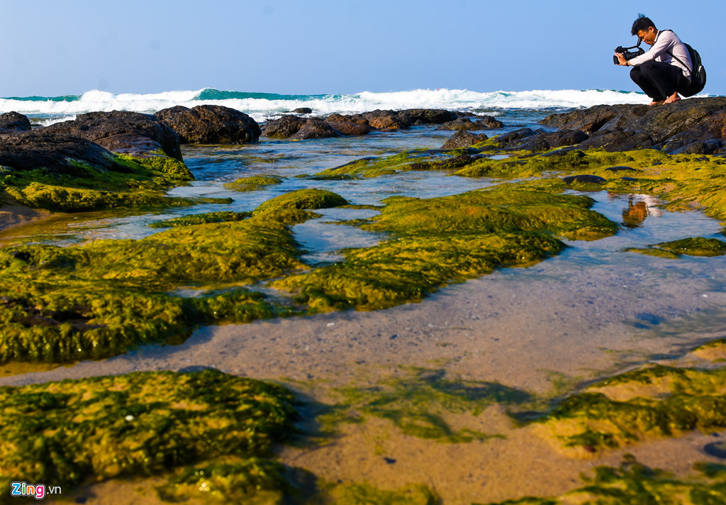 """Bãi đá trầm tích núi lửa phủ kín rêu xanh trải dọc ven bãi biển Lệ Thủy (xã Bình Trị, huyện Bình Sơn) thu hút nhiều """"tay máy"""" về đây ghi lại khoảnh khắc tuyệt đẹp đầu xuân."""